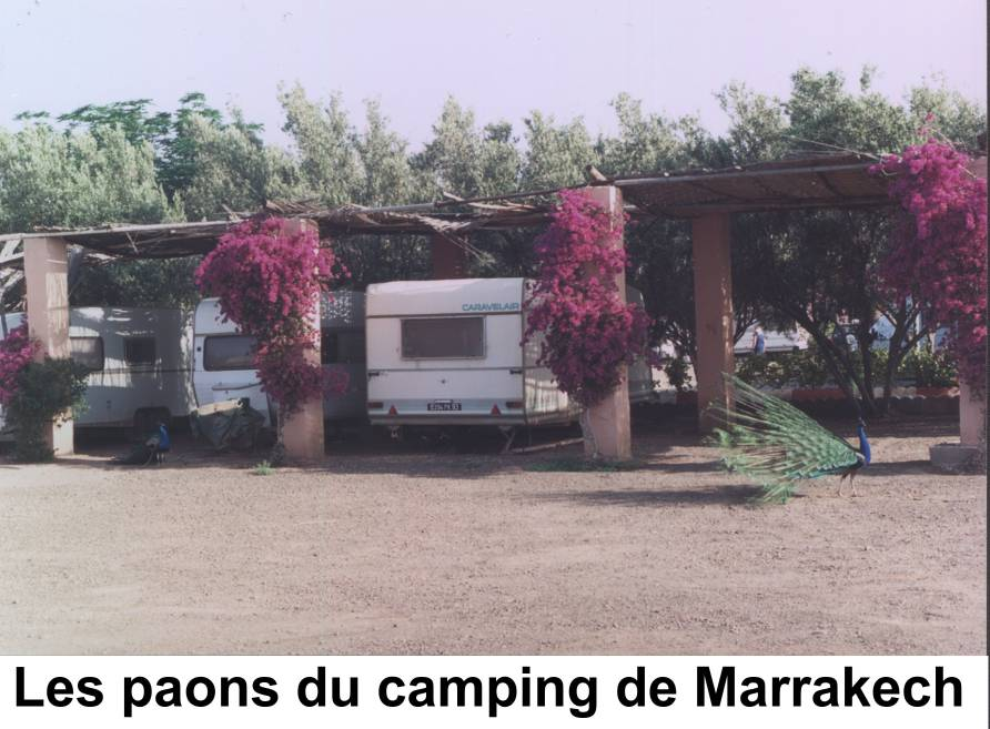 paons camping